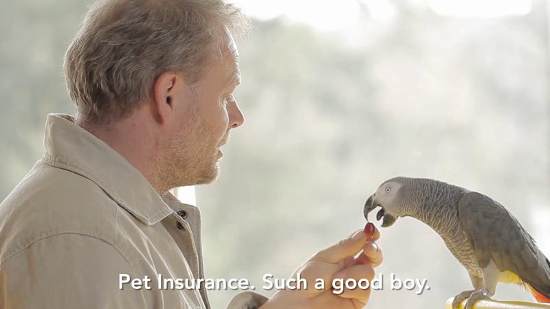 Ceska Pojistovna - Pet Insurance Parrot