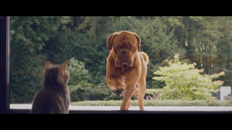 Shüco / Cat & Dog