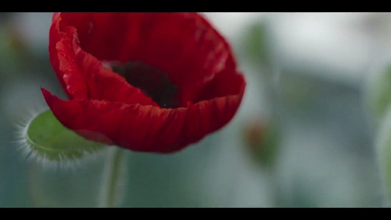 Royal British Legion - Flanders Fields