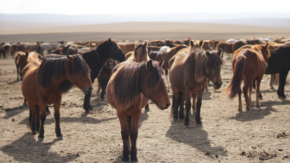 Mongolia - Hills / Rivers / Horses / Steppe