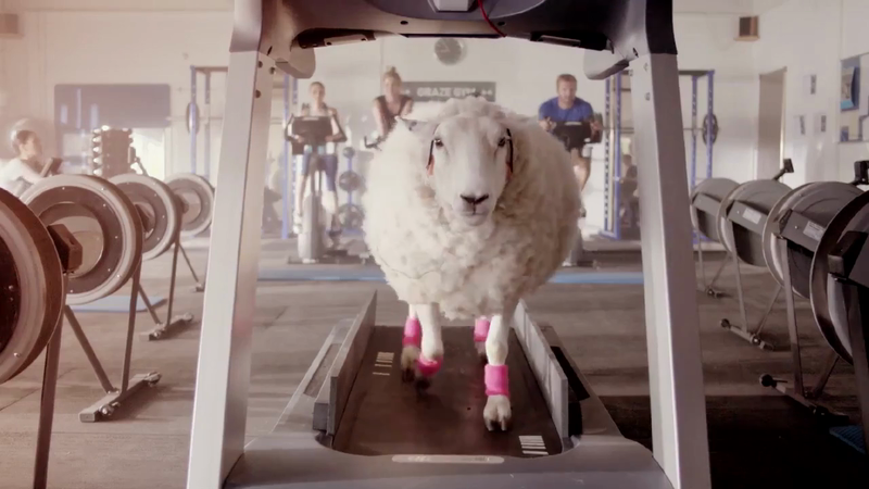 No Sweat - Campaign for Wool