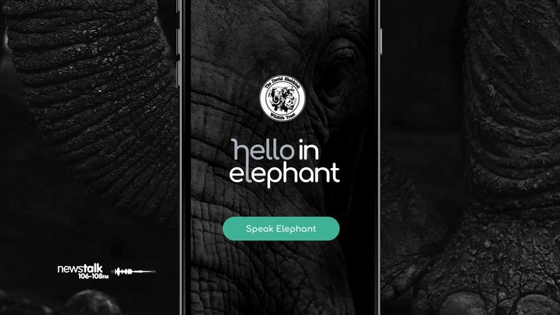 Hello In Elephant