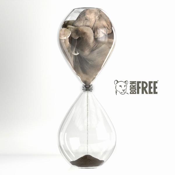 Born Free - Elephant crisis