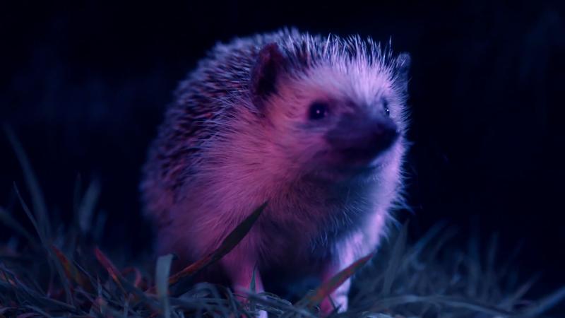 Warner Edwards Gin - Hedgehog