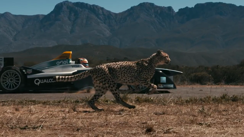 Formula E vs. Cheetah