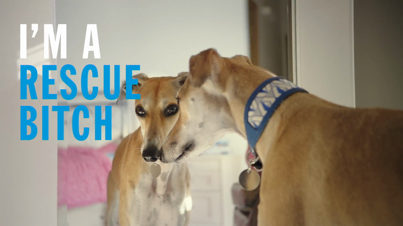 Battersea 'Rescue Is Our Favourite Breed'
