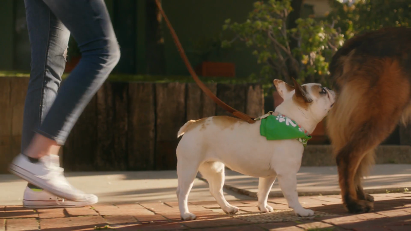 "Rover.com Introduces ""The Dog People"" in First Integrated National Brand Campaign"