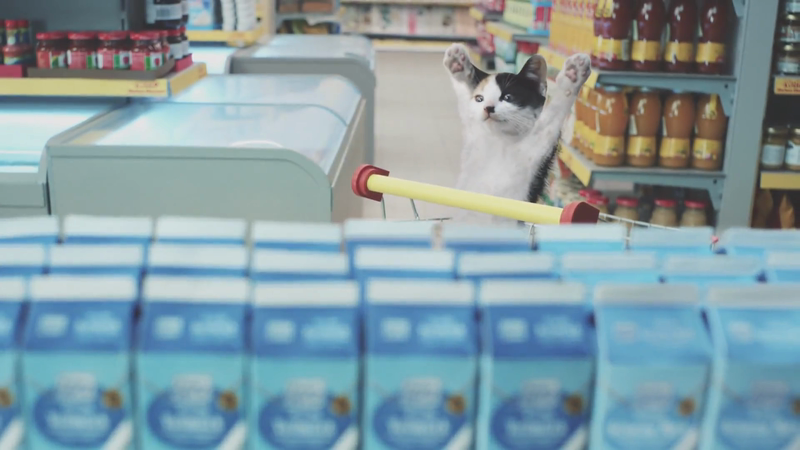 Netto - Cats
