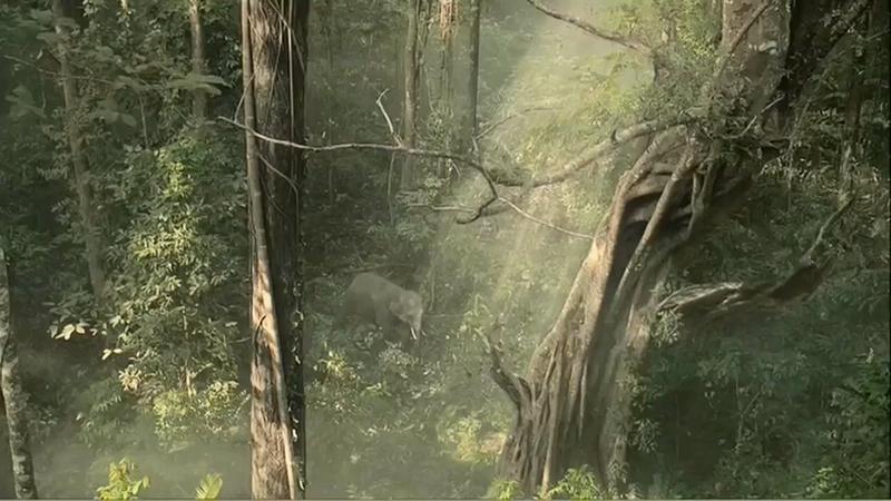 """LG """"Elephant"""""""