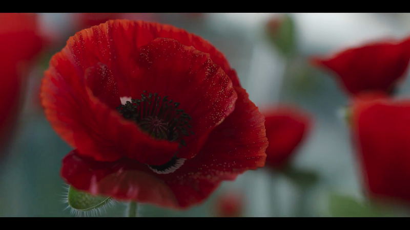 Royal British Legion - Rethink Rememberance