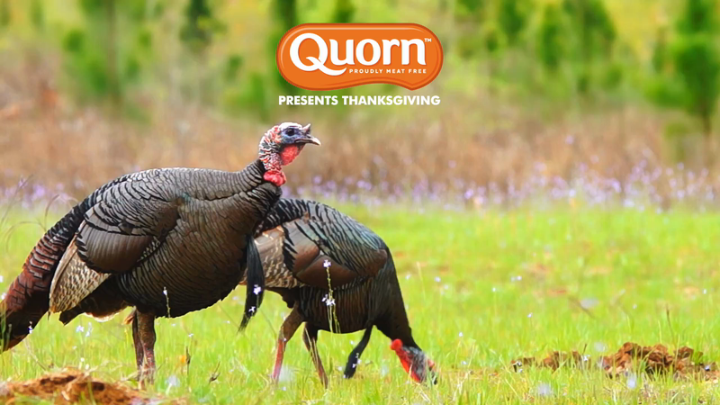 Quorn - Turk'y