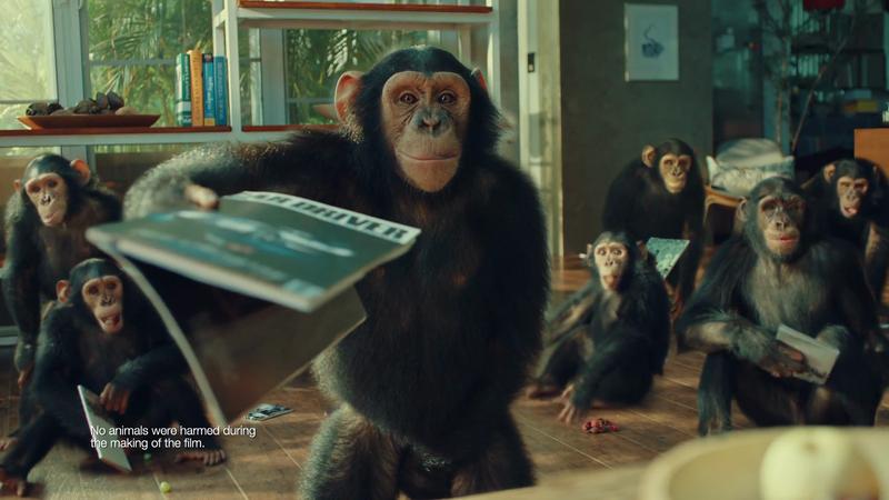 Blue Star AC 'Chimpanzee'