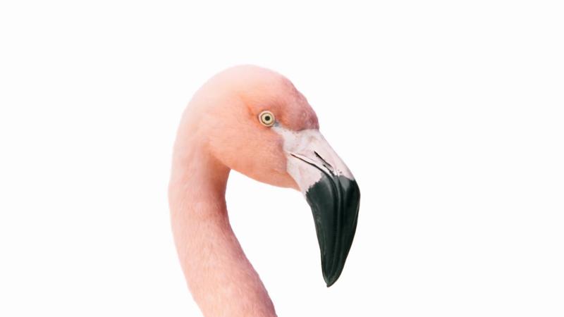 TELUS | Flamingo