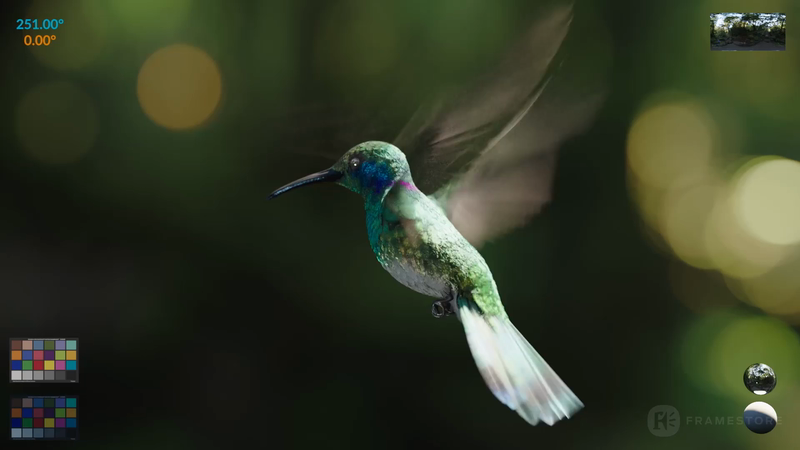 Hummingbird-support