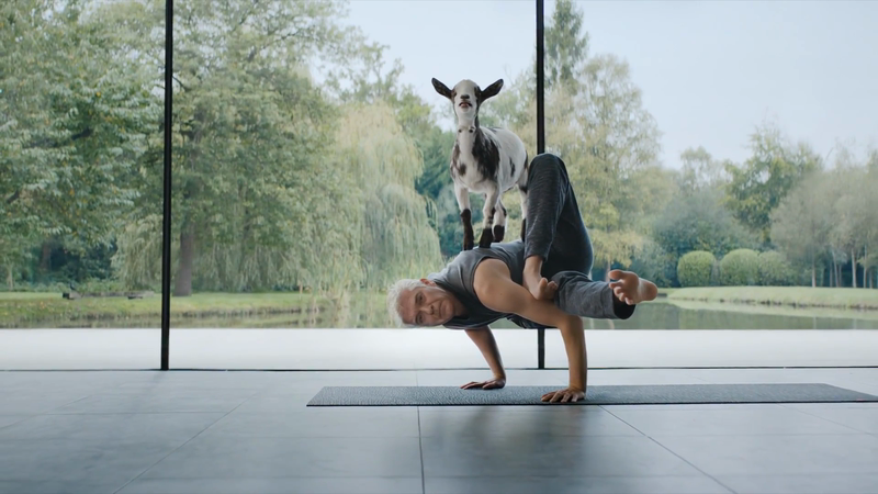 We Buy Any Car - Goat Yoga