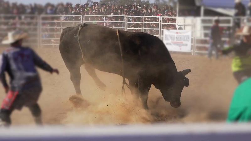 C Spire: No Bull