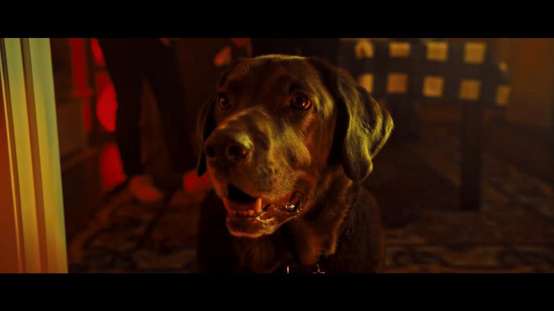 """Scott Cudmore - CAA - """"Good Dog"""""""