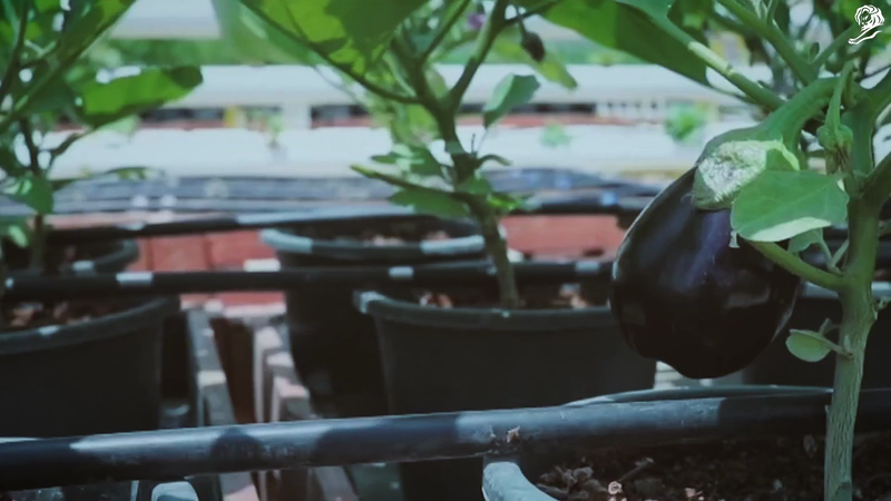 Knorr: Rooftop Farms